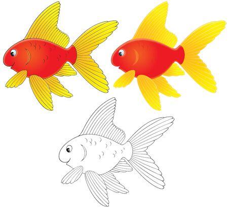 Goldfish Stock Photo - 6901071