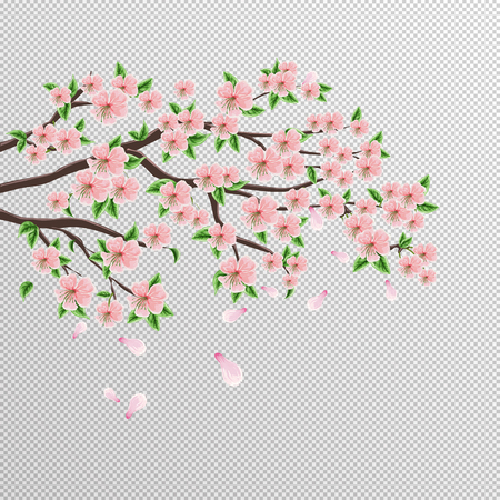Sakura branch of Japanese cherry tree with beautiful pink flowers. Vector drawing on an isolated background. Illustration.