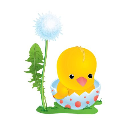 The chick sits in an egg-shell near a dandelion on a green lawn. Stock vector illustration in cartoon style. Easter card.