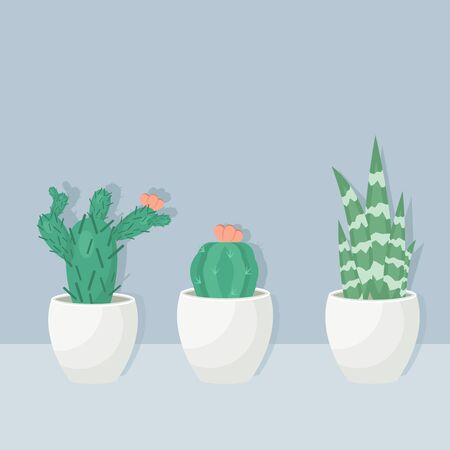 Collection of various cactus and succulent plants in  pots. Potted cactus house plants on white shelf against blue wall. Vector Illustration