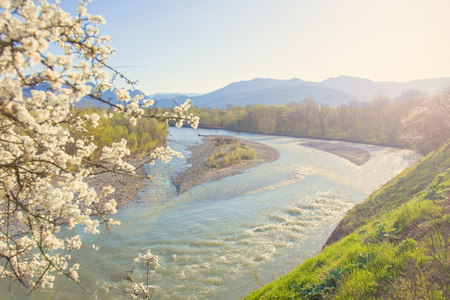 View of a mountain river and mountains through flowering trees