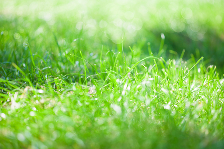 Green bright grass, background, bokeh Summer sunny concept
