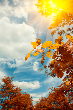 Autumn leaves against the blue sky with sunlight glare. Background Stock Photo