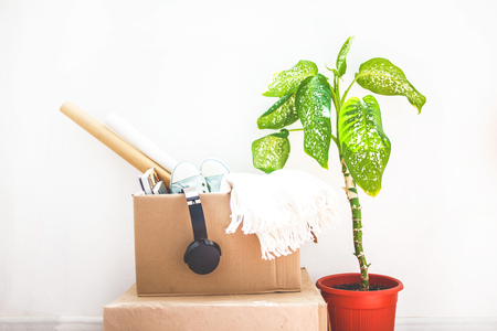 moving, things in boxes, garage sale, flower in a pot on a white background Copy space Stock Photo