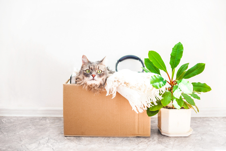 Things to move, a cat in a box, a flower in a pot. Garage sale and moving concept Copy space