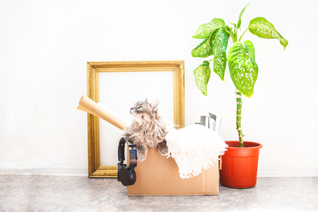 Boxes for moving with things, a cat in a box, a flower in a pot, old frame on a white background Garage sale concept Copy space. Stock Photo