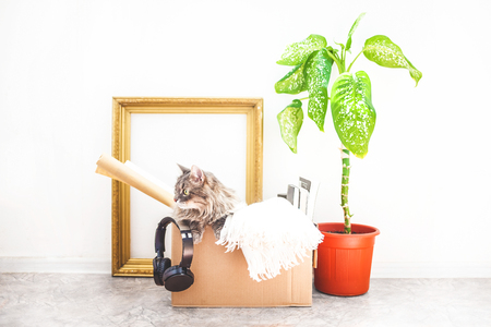 Boxes for moving with things, a cat in a box, a flower in a pot, old frame on a white background Garage sale concept Copy space Stock Photo
