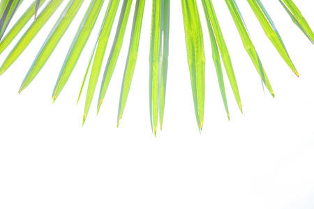 Tropical background Palm leaves Bright sunny colors Copy space Stock Photo