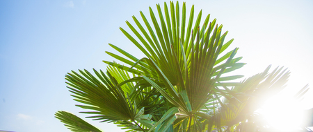 Tropical background Palm leaves Bright sunny colors Copy space Selective focus Banner Stock Photo