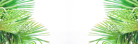 Banner Palm leaves against the sky Tropical background Bright sunny colors Copy space