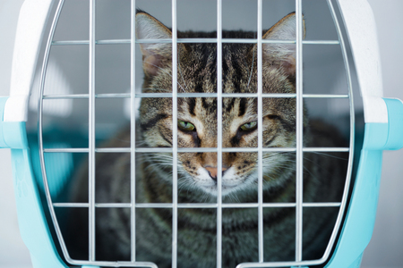 Gray cat in a cage for transportation. Carrying for animals. Relocation and animal transportation concept Close up