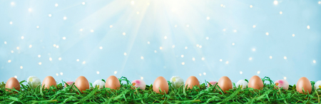 Easter eggs on green grass, tulips with bokeh and sunlight on a blue background Easter concept Copy space Banner