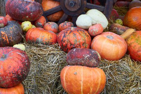 Pumpkin background Many orange pumpkins await sale at the vegetable market 스톡 콘텐츠