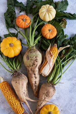 Autumn harvest of vegetables. pumpkin, radish, corn Stock Photo