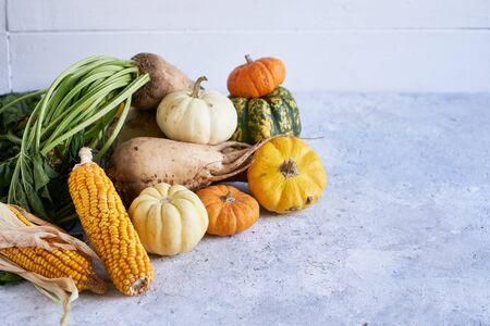 Autumn harvest of vegetables. pumpkin, radish, corn 스톡 콘텐츠