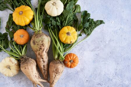 Autumn harvest of vegetables. Pumpkins, radish Copy space