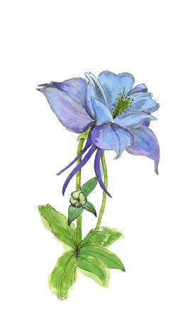 Watercolor hand drawn botanical sketch. Blue and purple flowers in bloom with buds isolated close up on white background.