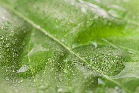 Fresh leaf with water raindrops natural macro wallpaper