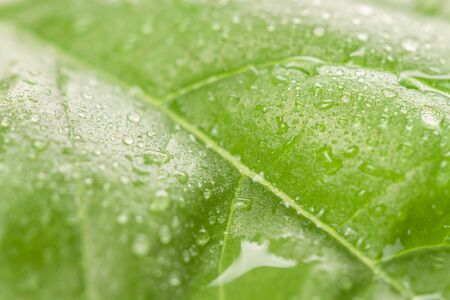 Bright fresh green leaf macro with rain water drops colorful floral wallpaper