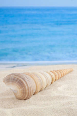 Spiral shape seashell on sandy beach center view with sea or ocean waves as background for vertical macro vacation wallpaper Stock fotó