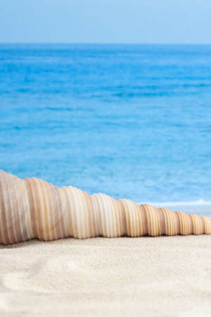 Spiral shape seashell on sandy beach between water and land with sea or ocean waves as background for vertical macro vacation wallpaper