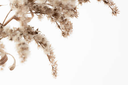Dry fluffy star shape little romantic flowers branch with vintage effect and place for text on light background macro