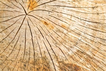 an old tree stump destroyed by a cracked texture Stock Photo - 14158980