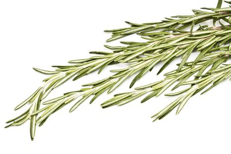 spicy herb rosemary isolated on white background Stock Photo