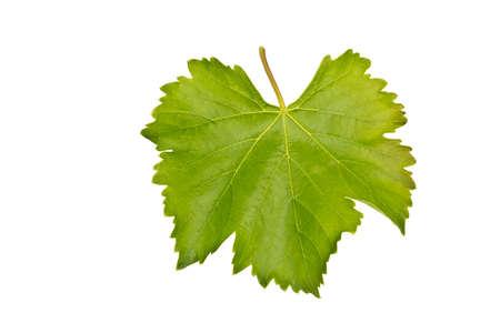 leaf grape: hoja de uva aisladas sobre fondo blanco Foto de archivo