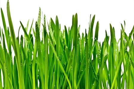 green juicy grass isolated on white background photo