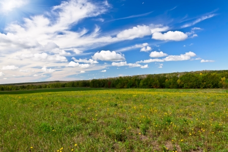 meadow and forest on a bright sunny day Stock Photo - 15166257