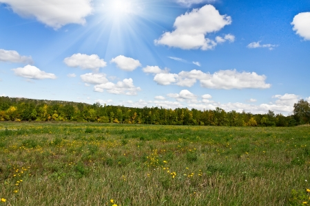 meadow and forest on a bright sunny day