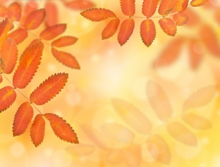 yellowing: yellowing autumn leaves on the background blur Stock Photo