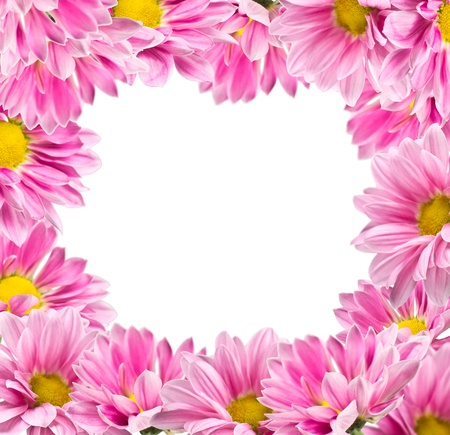 Frame from flowers of pink chrysanthemums on a white background photo