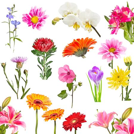 Collage of blooming flowers isolated on white background Stock Photo - 17531774