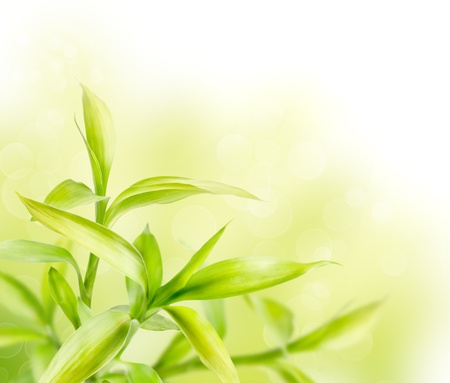bamboo background: Abstract spring green background with bamboo leaves