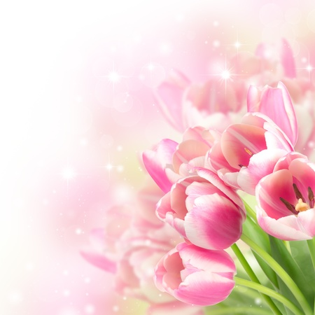 Flowers blooming tulips on a blurred background photo