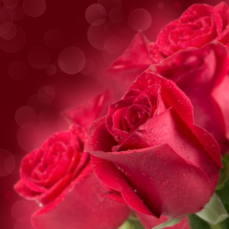 Blooming red roses on blurred background photo