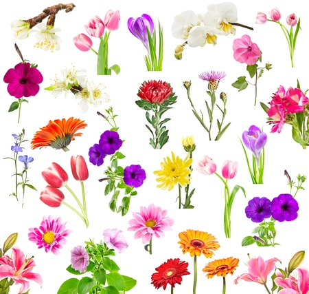 Collage of blooming flowers isolated on white background photo