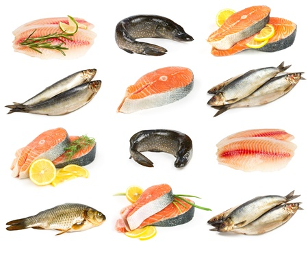 Set of fresh and saltwater fish isolated on white background photo