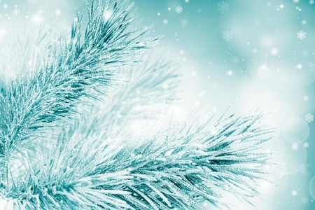 Snow-covered fir Christmas tree branch Stock Photo
