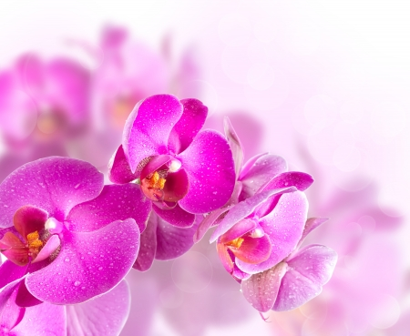Flower blossoming orchids on a blurred background photo