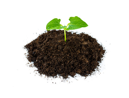 Heap soil with a green plant sprout isolated on white background