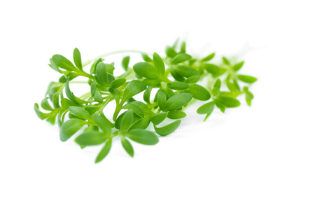 The watercress isolated on white background, close up.