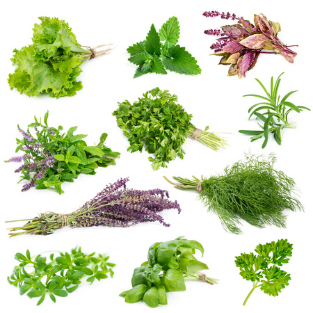 Set of aromatic herbs and spices isolated on white background photo