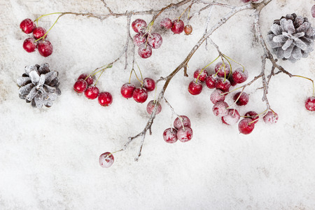 Christmas branch with berries on snow background