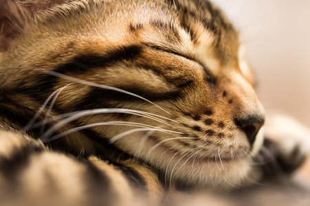 Sleeping red tabby kitten, close-up. Shallow depth of field. photo