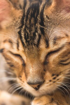 Portrait of red tabby kitten close-up photo