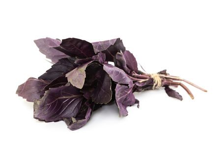 basil: Fresh purple basil isolated on white background