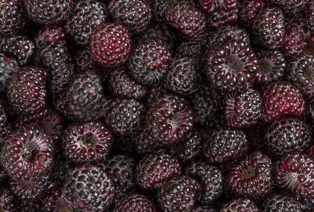 black raspberries: Background of fresh ripe black raspberries. Top view. Stock Photo